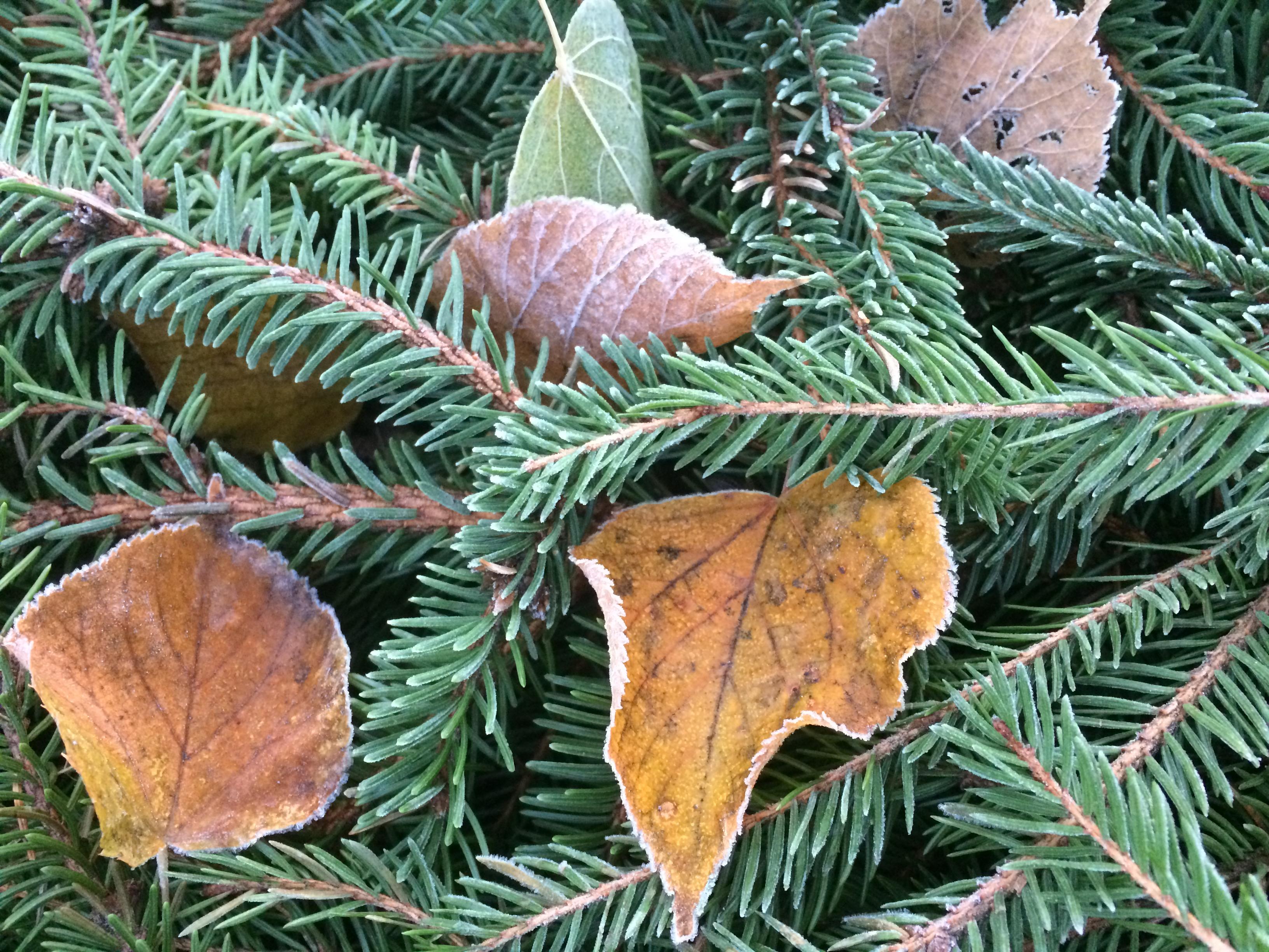 Att bli medveten om lyckan i det lilla, frost på ett löv.